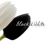Black & White / B&W